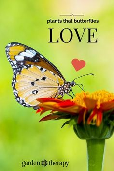 Garden Therapy shares how to make a butterfly feeder and 21 plants that butterflies love like Bee Balm, Catmint and Phlox. Fill your garden with colorful plants and the butterflies will be there in no time.