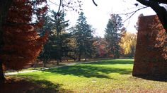 Sárvár várpark ősszel Trunks, Plants, Drift Wood, Stems, Tree Trunks, Plant, Planting, Planets
