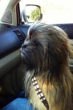 I want a Wookie co-pilot!