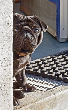 9 Tips for Introducing Your Dog to a New Home
