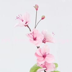 Cherry Blossom Video Tutorial ♥Bobbies Baking Blog♥ http://bobbiesbakingblog.com/blog/2014/03/21/gumpaste-cherry-blossom-tutorial/