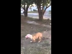 DOG KA KAMAAL!!! VERY INTERESTED & FUNNY VIDEO
