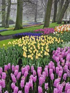 Photographic Print: Hyacinth and tulip flowers, Keukenhof Gardens, Lisse, Netherlands by Adam Jones : Tulips Garden, Tulips Flowers, Spring Flowers, Flower Gardening, Fruit Garden, Landscaping With Rocks, Front Yard Landscaping, Landscaping Ideas, Flower Landscape