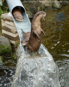 Otter is holding up incoming traffic