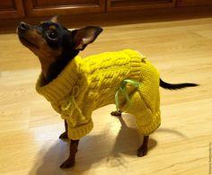 Купить Вязаный комбинезончик для собачки(пражский крысарик) - ярмарка мастеров, ярмарка ручной работы, одежда для собак