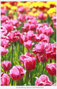 tulips in bulk is best!