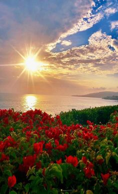Hello World ! Beautiful Nature Pictures, Beautiful Nature Wallpaper, Nature Photos, Amazing Nature, Pretty Pictures, Beautiful World, Beautiful Landscapes, Beautiful Flowers, Simply Beautiful