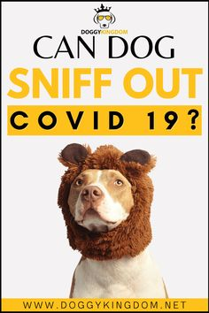 Can dog sniff out Covid-19? coronavirus and dogs, everything you want to know about dogs and coronavirus Cute Dogs And Puppies, I Love Dogs, Frenchton Dog, Whoodle Dog, Big Dog Little Dog, Smartest Dogs, Dog Cuddles, Spotted Dog, Dog Heaven