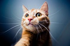 Between travel, stormy weather, and fireworks, summer can be a stressful time for pets. Here are some tips to help calm your cat.