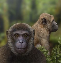 Fossil discoveries from the East African Rift revealed two unreported species of early primates, depicted here: Rukwapithecus, front, center, and Nsungwepithecus filling in a 10-million-year gap in the fossil record from a period when apes and Old World monkeys diverged. The primates lived during the Oligocene epoch, which lasted from about 34 million to 23 million years ago, at a time when mammals began to evolve rapidly.