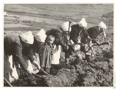 Slovak women working on a field. Heart Of Europe, Wild And Free, Old Photos, Museum, Retro, Country, Couple Photos, Nature, Painting