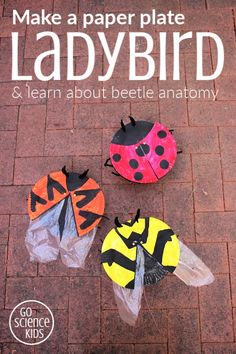 How to make paper plate ladybirds (or ladybugs), with rotating elytra and hidden wings! Fun hands-on biology craft for kids to learn about beetle anatomy and three different ladybird species. Fun nature science project for kids. From Go Science Kids Ladybug Crafts, Frog Crafts, Dinosaur Crafts, Ocean Crafts, Science Crafts, Science Activities For Kids, Preschool Crafts, Vocabulary Activities, Insect Activities