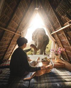 Thailand Travel Tips, World Globes, Little Kitty, America, Adventure, Nature, Elephants, Painting, Instagram