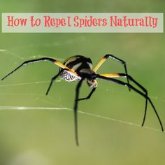 How to Repel Spiders Naturally