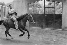 Developing World B/W · Peter Bennett Horses, America, Black And White, World, Travel, Animals, Viajes, Animales, Animaux