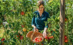 Gesunde Tomaten ernten: Die Tipps unserer Community