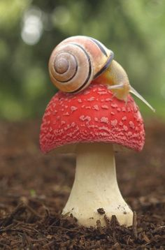 I have alway/ loved snails! I like the swirl pattern of the shell- they are beautiful. They also remind me of my childhood.