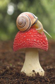 a Snail and a Mushroom. Feelin' like the 60's?