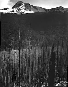 Ansel Adams - Burned, snow-cover area of Glacier National Park Ansel Adams Photography, Photography Tips, Nature Photography, Black And White Landscape, Black N White Images, Great Photographers, Landscape Photographers, Glacier National Park Montana, Photo Mural