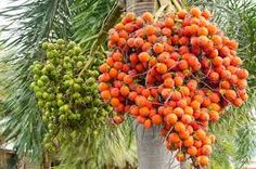 Image result for kerala nuts