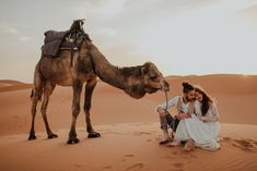 Funny Wedding Photos We can't get over this camel-couple photo shoot at this Sahara elopement Pre Wedding Photoshoot, Wedding Shoot, Dream Wedding, Elopement Wedding, Couple Photography Poses, Couple Portraits, Couple Photos, Bride Photography, Foto Dubai