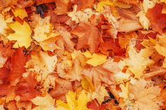 4. To Make Your Home Smell Like Fall Leaves, Try: