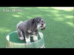 #Cute #Dog Shows Off Tricks