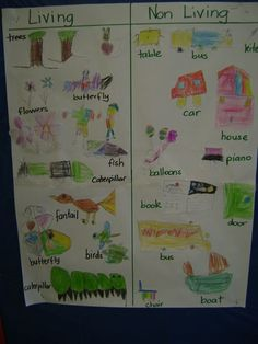 This week we have explored how we can use a T chart to sort and organise information. We looked at living and non living things.    We start...
