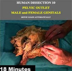 CADAVER DISSECTION VIDEOS pelvic male and female genitals