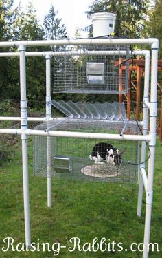 Cramped smelly wooden hutch, or this very cool PVC frame on which are hung wire cages? The best part is you can build it yourself. Rabbit Pen, Rabbit Farm, Small Rabbit, Bunny Rabbit, Rabbit Hole, Raising Rabbits For Meat, Meat Rabbits, Rabbit Hutch Plans, Rabbit Hutches