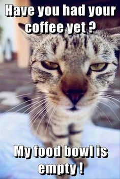 Funny, Memes, Pictures: funny-animal-pictures-16-2