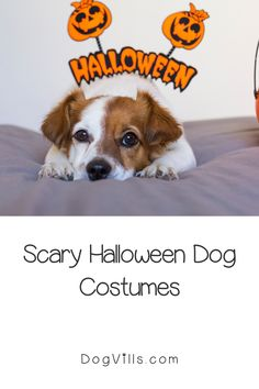 Want to dress your pups up in some scary Halloween dog costumes this year!We've got you covered! Dog Halloween Costumes, Cute Costumes, Halloween Fashion, Dog Costumes, Scary Halloween, Cute Dog Collars, Diy Dog Toys, Dog Training Tips, Dog Accessories