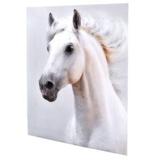 """Feel the wind rushing through your hair as you gallop anywhere you please unbridled. Evoke the total sense of freedom with the Sultan 59"""" Acrylic Wall Art. White Sinatra protects the image printed on the highest quality photography paper as does the 1/8 of an inch clear Plexiglass mount. With the convenient molding on the back, you can hang this piece anywhere you want to feel free."""