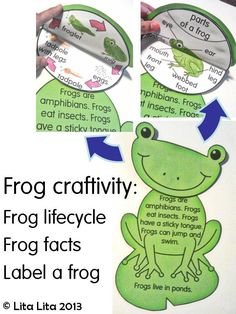 Frog science crafttivity for Frog Life Cycle English Spanish 1st Grade Science, Kindergarten Science, Elementary Science, Science Classroom, Teaching Science, Science Education, Science For Kids, Science Crafts, Science Activities