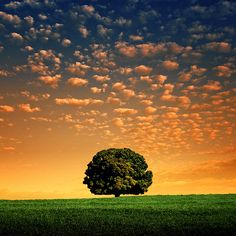 Lonely Tree with little cloudlets above. kn (I made up cloudlets-no need to comment it's not a word! :) kn)