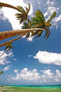 palms on Little Corn Island, Nicaragua