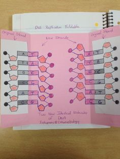 DNA Replication Foldable Inside