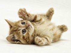 cuki cicák - Google keresés