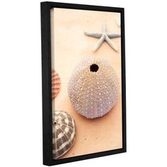 ArtWall Elena Ray Seashells Gallery-Wrapped Floater-Framed Canvas, Size: 16 x 24, Brown