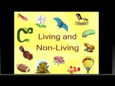 Very informative video that explains what makes living things living and what makes nonliving things nonliving. I would use this to pause and talk with students about information in a specific slide, let them think aloud and discuss with one another. First Grade Science, Primary Science, Kindergarten Science, Science Classroom, Science Education, Teaching Science, Science Activities, Science Projects, Classroom Activities