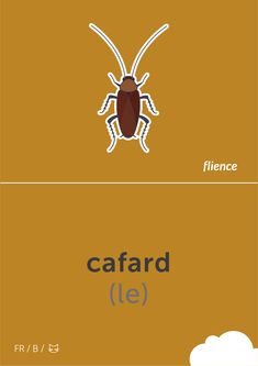 Cafard #flience #animal #insects #english #education #flashcard #language