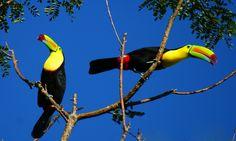 Palo Verde National Park Tour, Guanacaste, Costa Rica