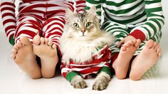 Adorable Christmas Pet Photography // matching onsies with kitty