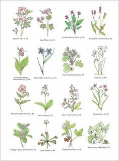 자수하기 좋은 일러스트들 : 네이버 블로그 Herbs Illustration, Botanical Illustration, Botanical Drawings, Botanical Art, Purple Tattoos, Wildflower Drawing, Adult Coloring Book Pages, Stitch Book, Paper Drawing