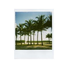 305 Photo of the Day Polaroid Palm Trees ❤ liked on Polyvore featuring polaroid, fillers, backgrounds, pictures and photos
