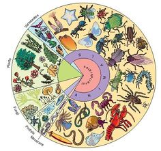 Ninety-eight percent of animals are invertebrates. (Reproduced by permission of The Gale Group.)
