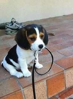 Ready For a Walk.