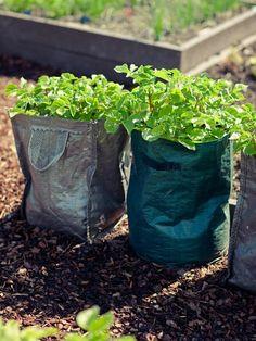 Grow Bags of Spuds
