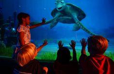 "Turtle Talk - Finding Disney: The Essence of ""Epcot®"" www.wdwradio.com"