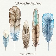 Brown and Blue Watercolor Feathers Set Free Vector